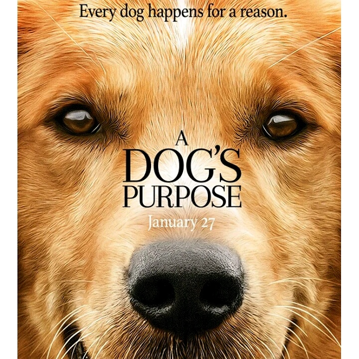 A screenshot of the poster of A Dog's Purpose showing a golden retriever