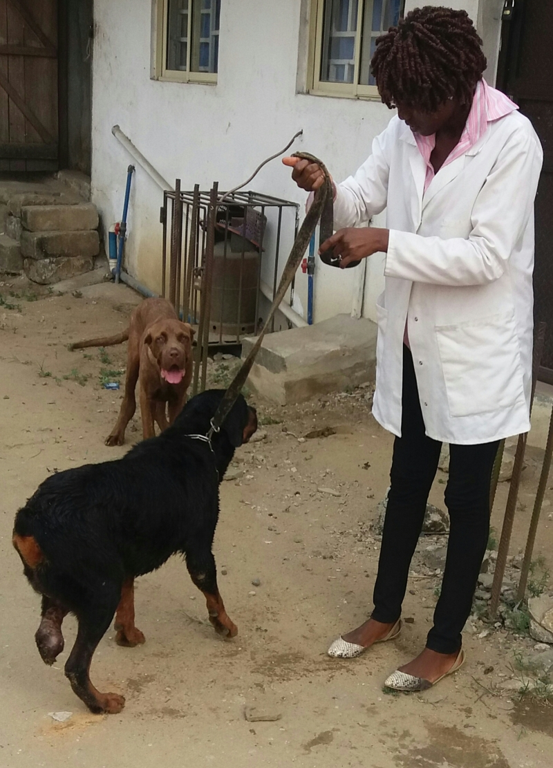 DrGbaksthevet holding  Colonel on a leash with his three legs