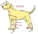 dog-40709_1280